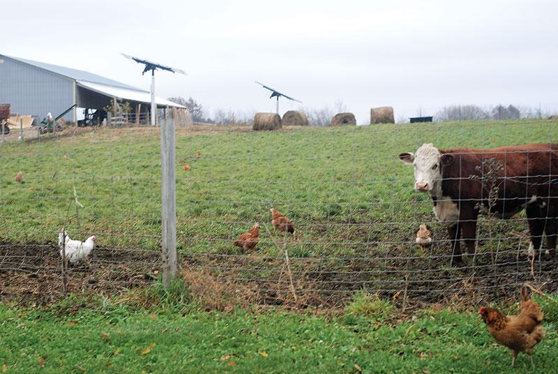 Dan and Kris Paape beefnbeaks farm sustainable farming
