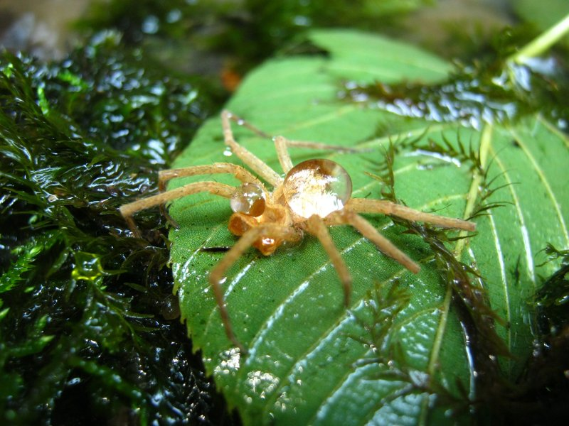 documentary spider