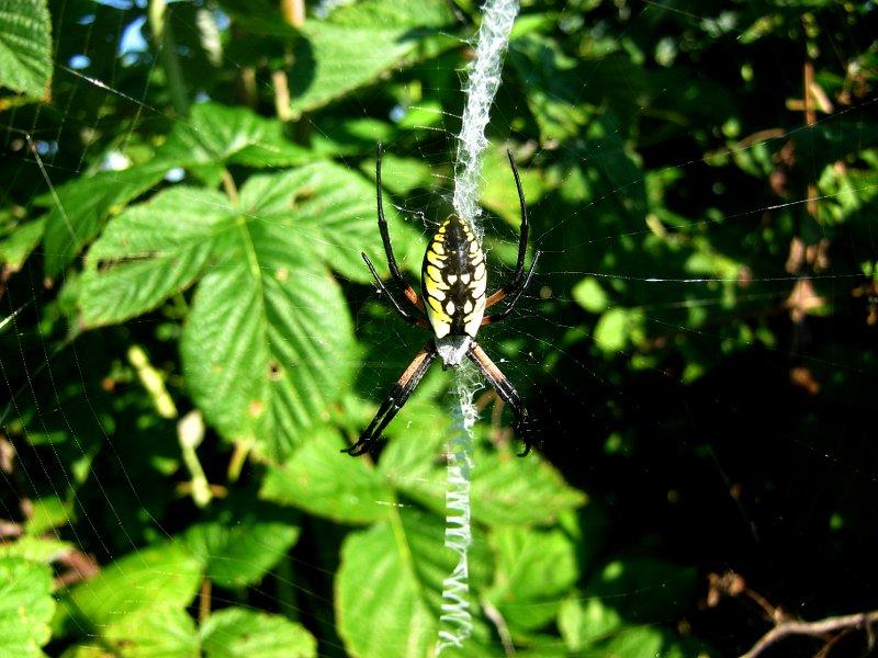 documentary spider web