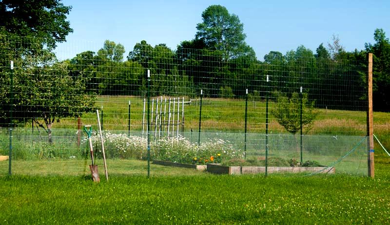 garden fence fencing deer