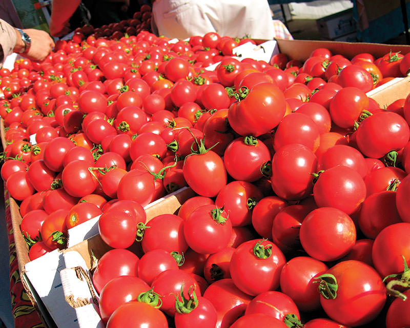 drought tomatoes