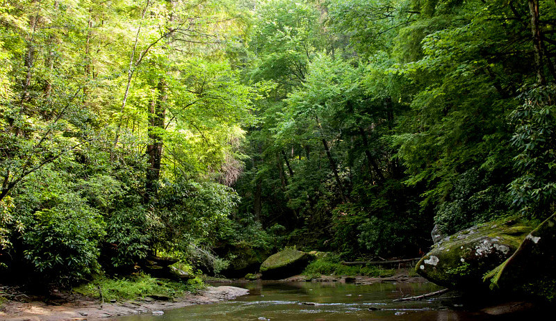 water forested stream