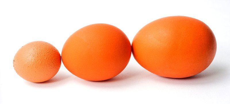 myths about roosters egg size