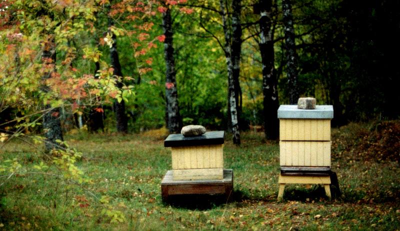 bees fall maintenance winter preparation