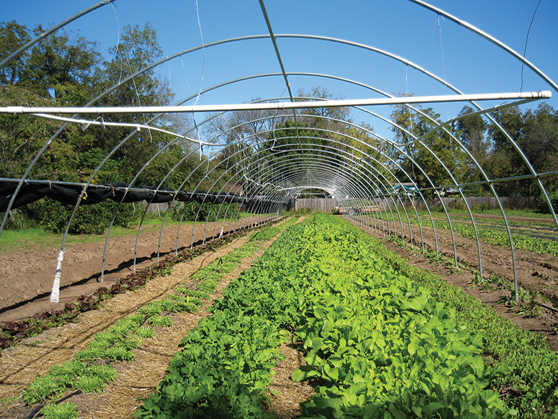 hoop house cover off