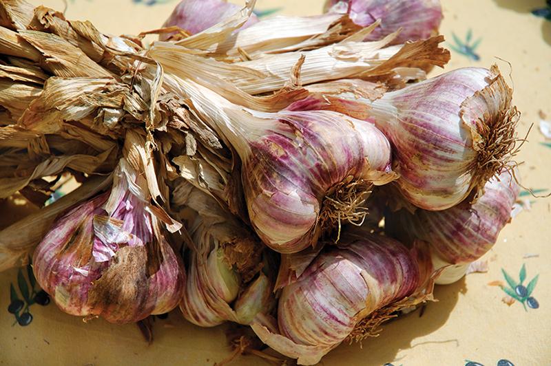 market crops garlic dry farming