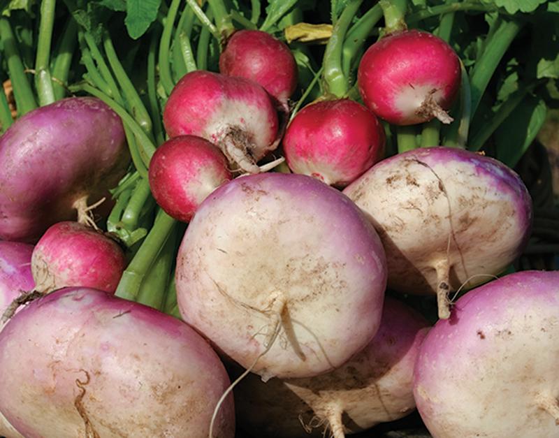 market crops radishes turnips