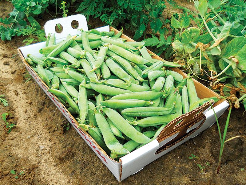 market crops peas