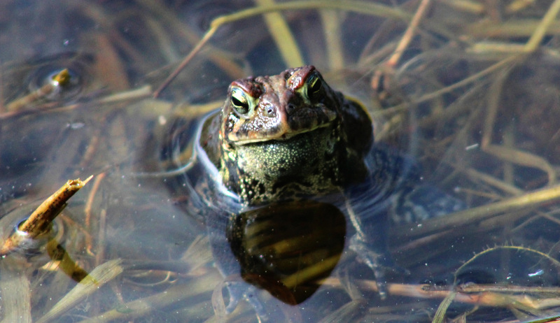 toads gardens