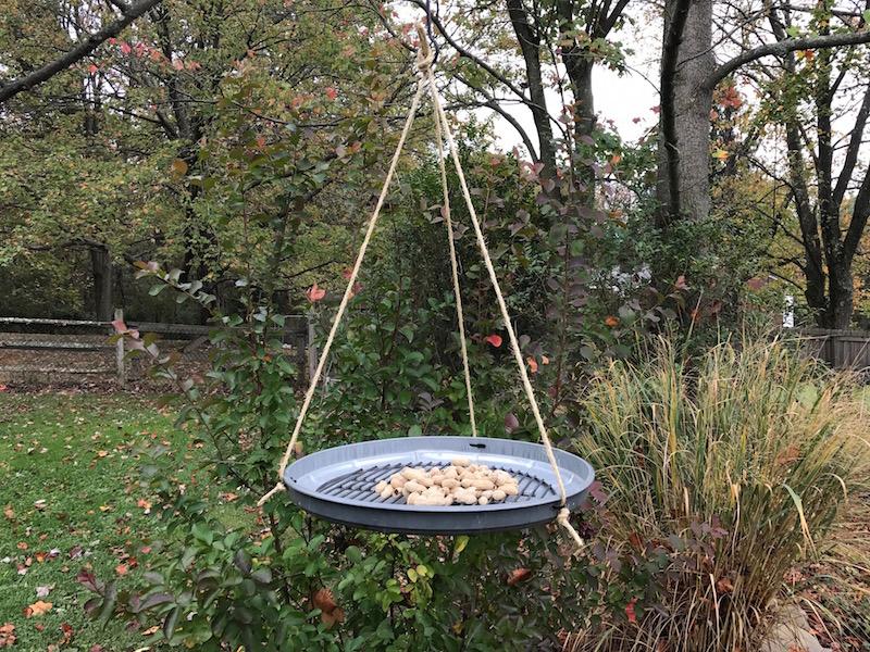 DIY platform bird feeder