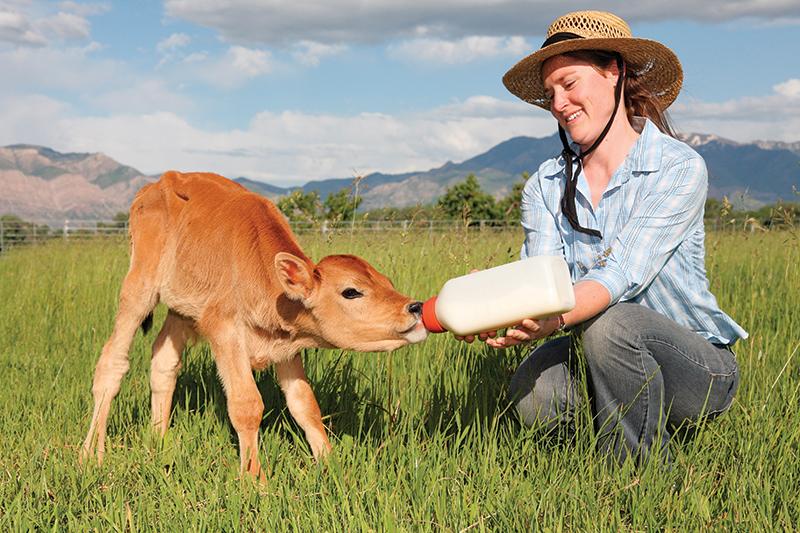 raising calves calf bottle babies