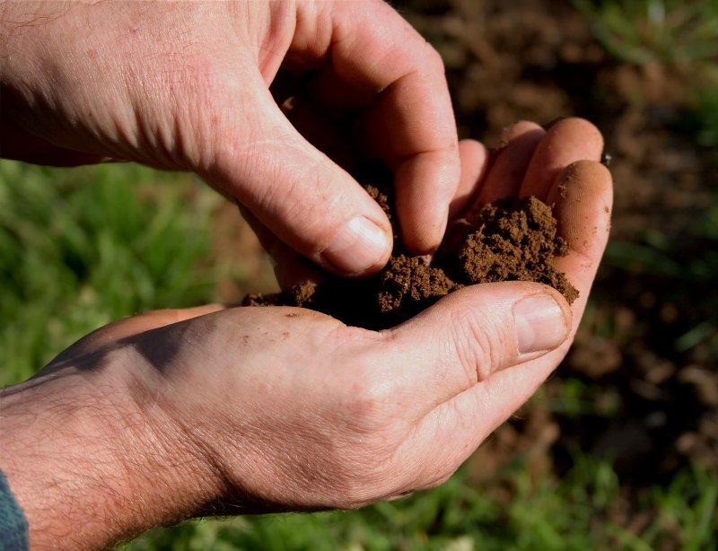 trees soil
