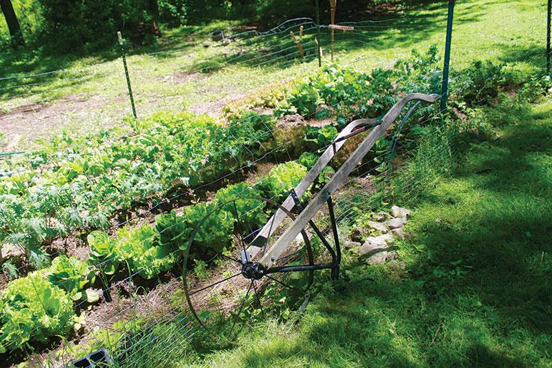 cold antler farm vegetables