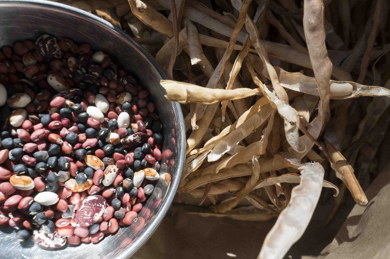 wood stove beans pods