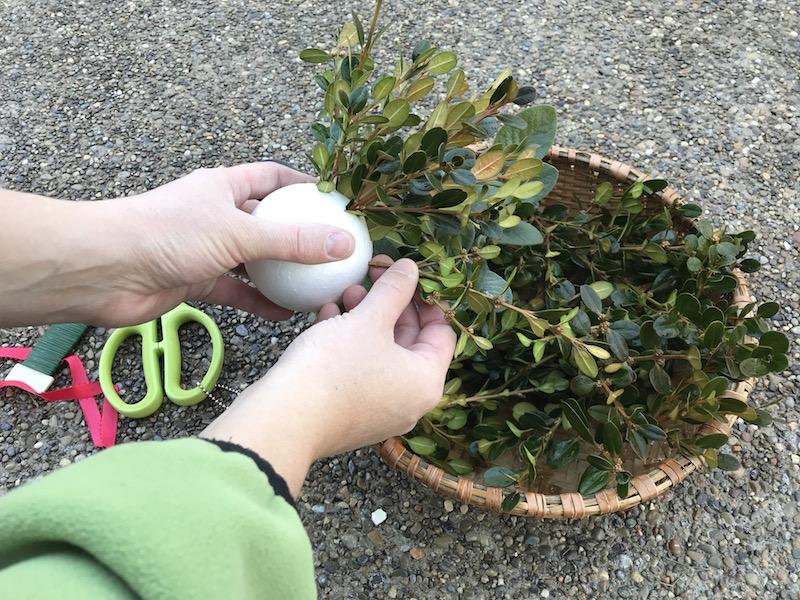boxwood and herb kissing ball