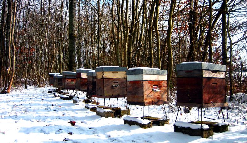 bees winter