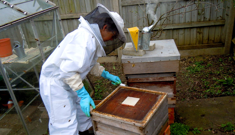 bees stress inspection
