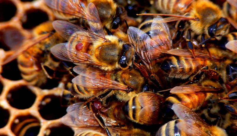 stress reduce bees