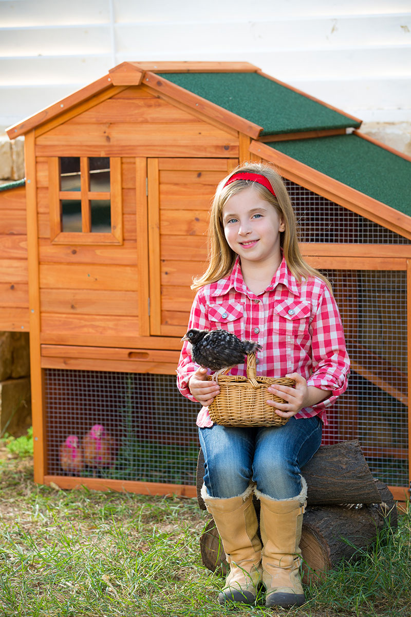 chicken ownership permits