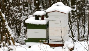 winter hives tips beekeepers
