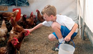 boy eggs chickens kids