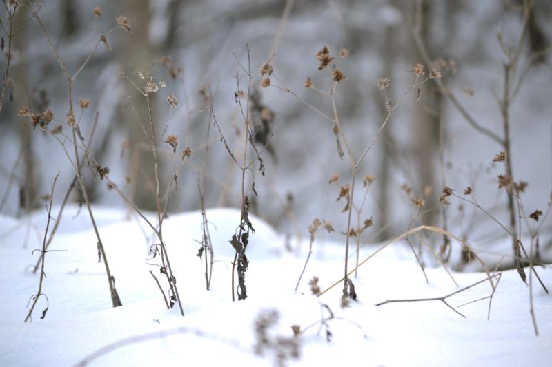 snowfall on farm
