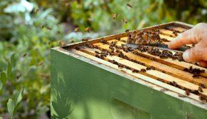 bees beekeeping woodenware langstroth hive