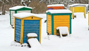 bees winter hive