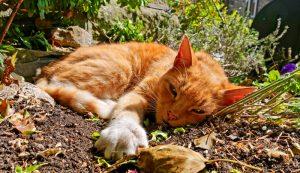weeds weeding cat