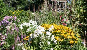 4 ways to divide perennials
