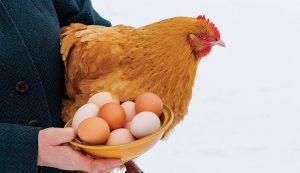 eggs freezing frozen prevent