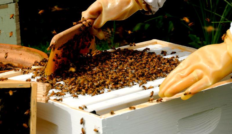 buying bees breeders beekeepers