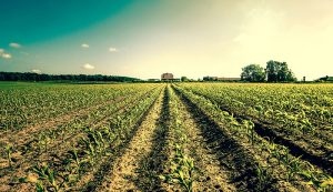 reduce work hours farm