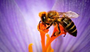 bee bees pollinators garden honeybees