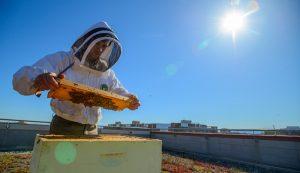 urban beehive bees beekeeping