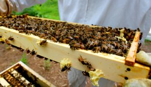 bees beehive hive inspection