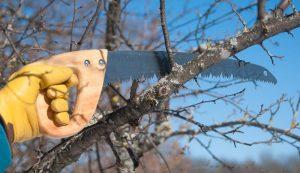 pruning saw gardening tools