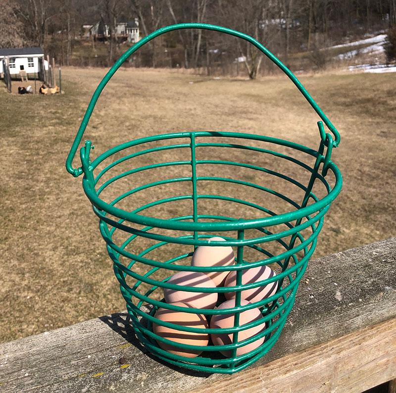 egg collection basket