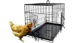 chicken coop dog crate