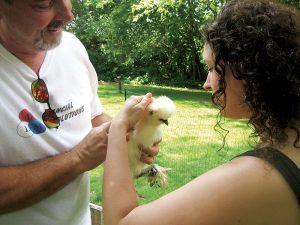 urban suburban chickens silkie bantam