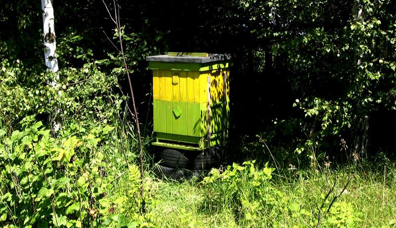 bees beehive spring