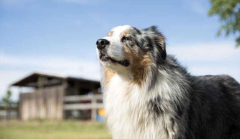 dog farm dogs nutrition