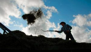 pitchfork pitchforks farm tools hay