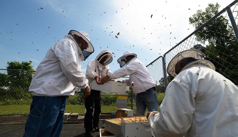 beekeeping equipment beekeepers bees
