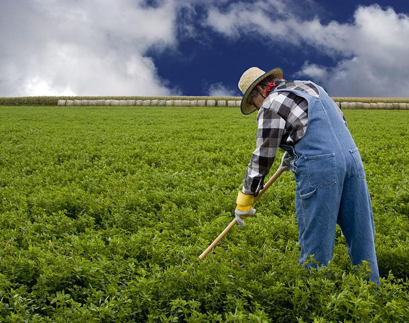 hobby farmers real