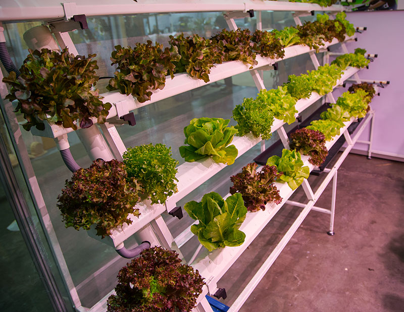 hobby farmers real hydroponics
