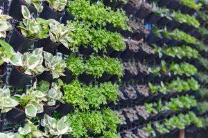 hobby farmers real vertical gardening