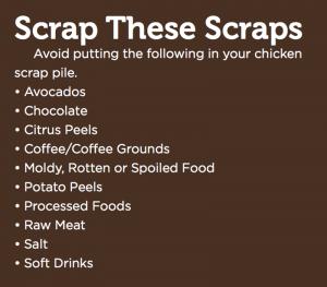 kitchen food waste scraps chickens