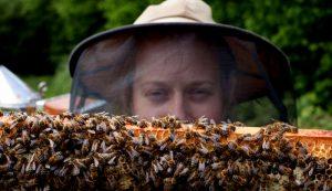 beekeeper bees beginner