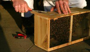 package bees beekeeping